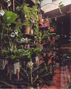 negozio fiori 3