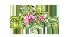 four-leaf-event-composizione-quadrifoglio