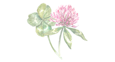 four-leaf-event-quadrifoglio-e-fiore