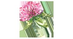 four-leaf-event-quadrifoglio-fiore